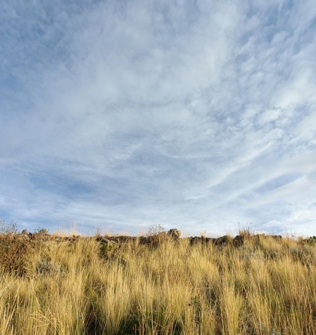 minimal landscape.jpg