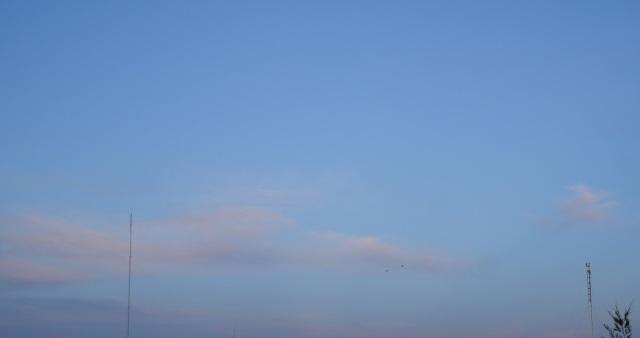 silky dawn