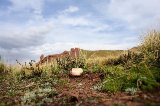 Hidden mushroom