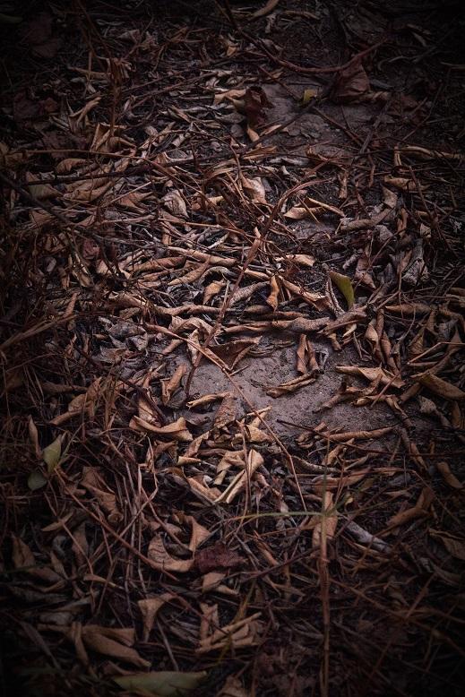 autumn void digital