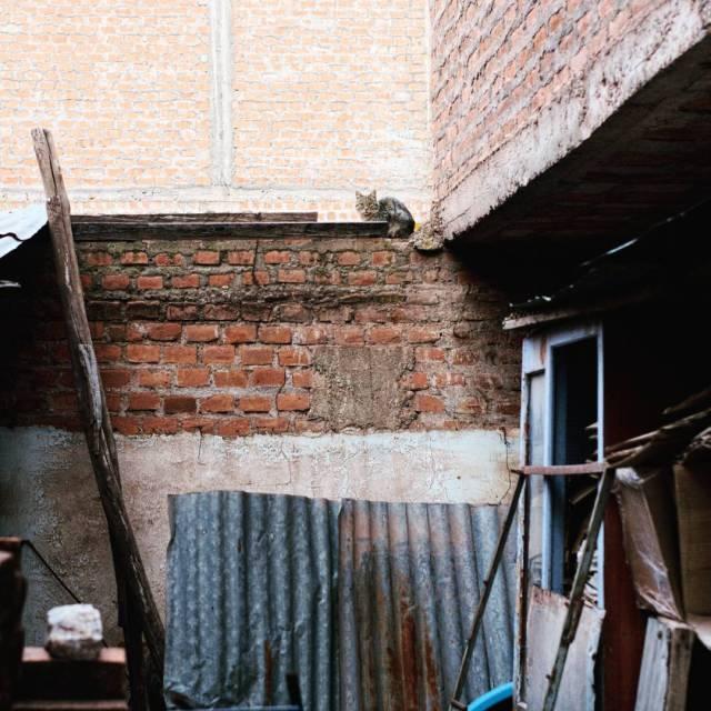 te-encontr-nekita--p-sooiiniicool--cat-bricks-old-textures-walls-fujifilm_xe1-fujinon35mmf14-fujifilm_xseries_25139866814_o