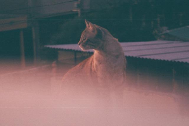 Photo15_15